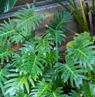 slide-plant-sprayer